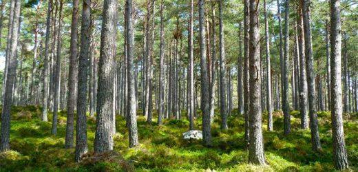 Abruzzo green: i progetti che ci portano in classifica nazional