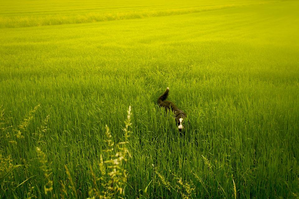Quartiere dei Fiori: apertura area sgambamento cani